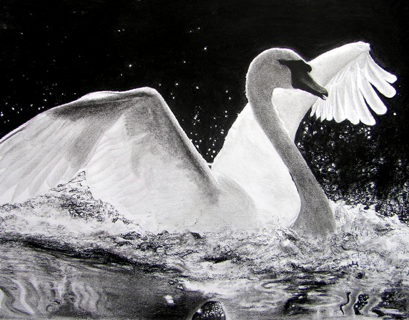 Swan Lake, (8x10 Charcoal, framed) Private collection.