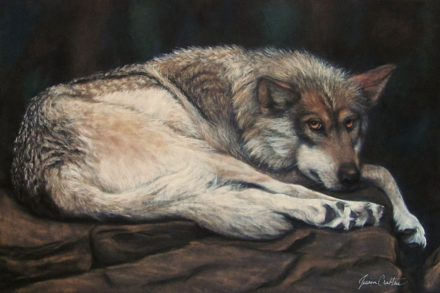 """Mexican Wolf"" 16x24 Original Pastel on Suede (Private Collection)"