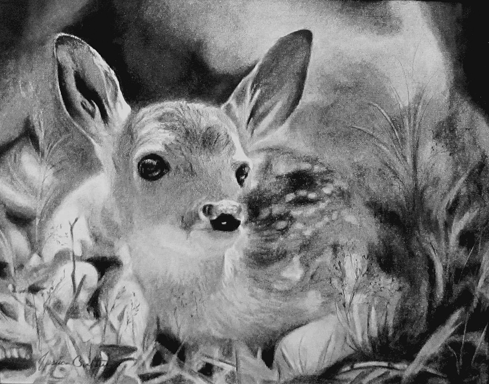 Little Fawn (8x10 Charcoal) by Jessica Crabtree