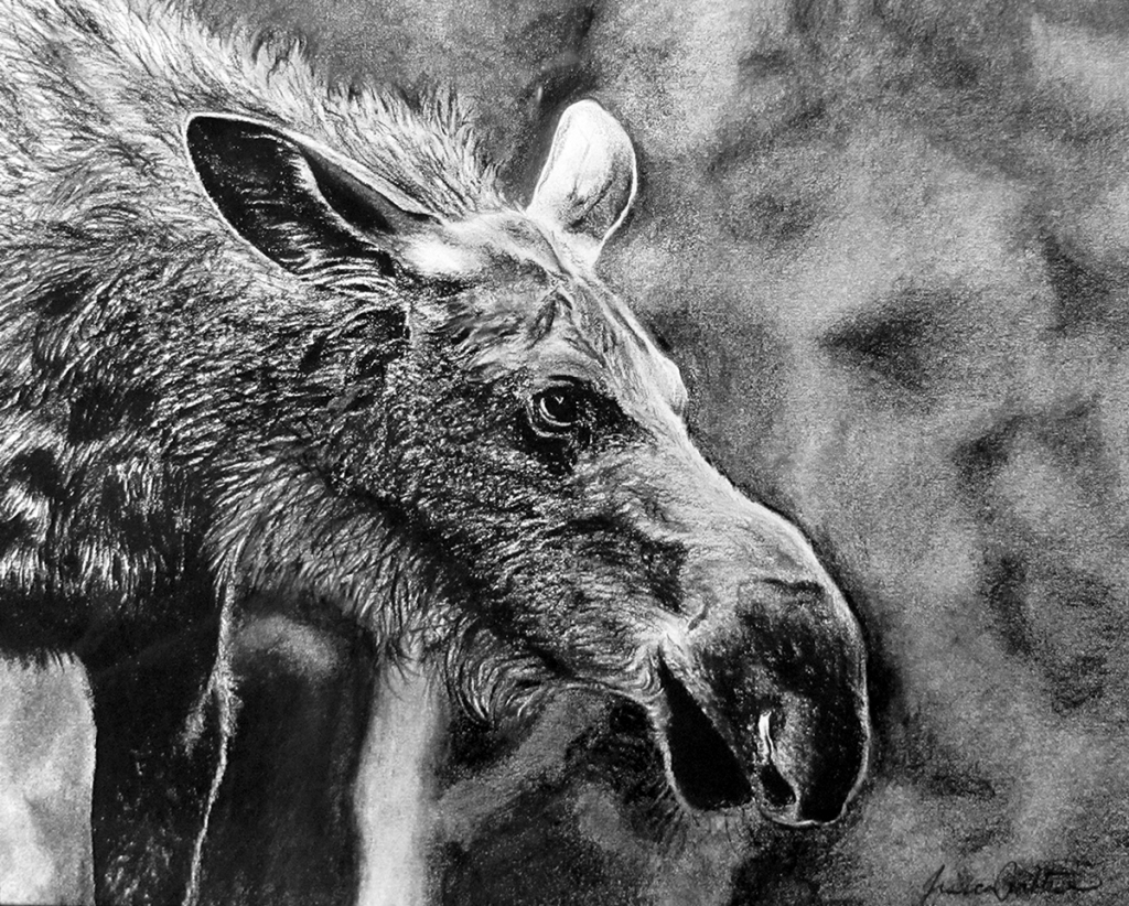 Lady Moose (8x10 Charcoal) by Jessica Crabtree